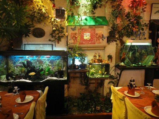 Chung Shing: Аквариумы с рыбами