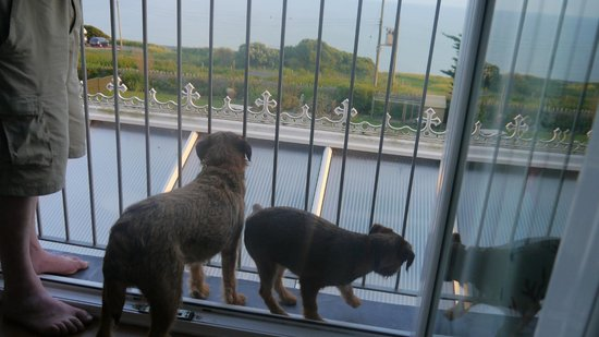 Chesil Beach Lodge : dogs even have a view