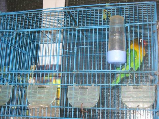 Residence Tislit : Petits oiseaux du hall d'accueil