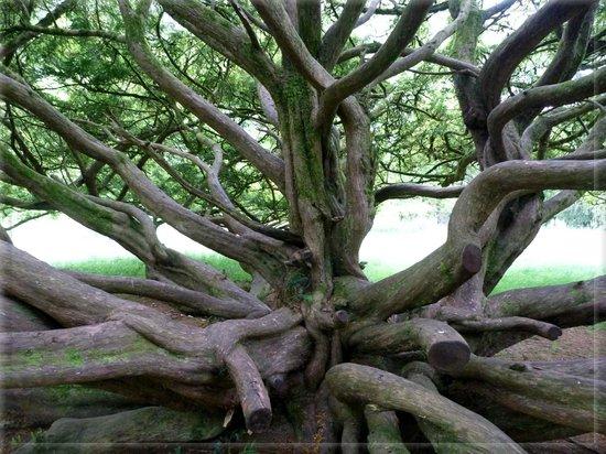 Emo Court: Tree