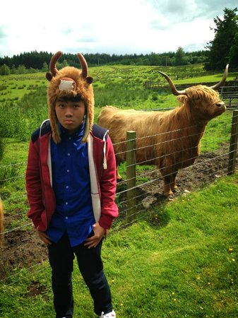 The Hairy Coo - Free Scottish Highlands Tour: I'm a hairy coo!