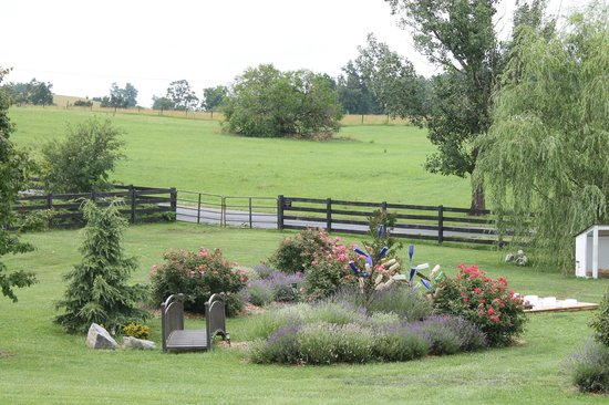 White Oak Lavender Farm & The Purple WOLF Vineyard