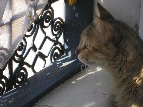 Riad Zara: Le matou de la maison