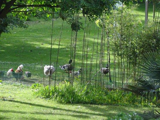 Villa Mon Repos : Garden