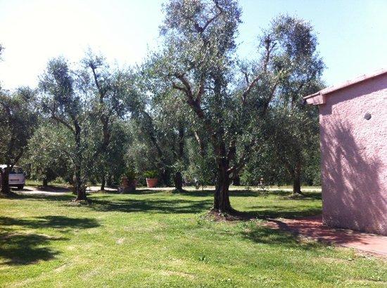 Relais Ciavatta: Gli ulivi di fronte al portico