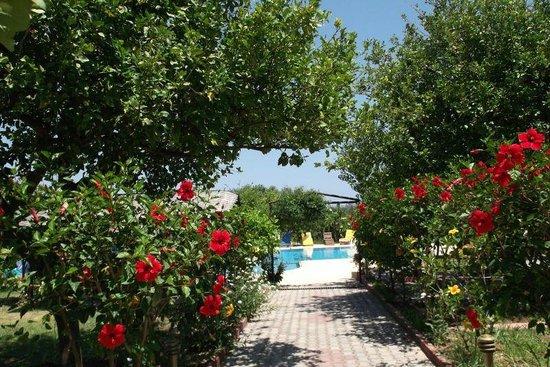Lapida Hotel : Garden leading to pool area