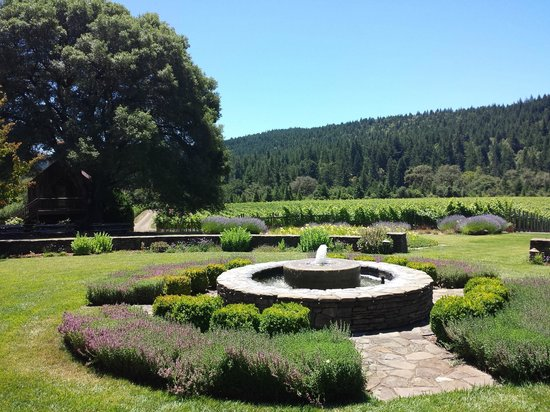 Goldeneye Winery : The tasting room garden, and vines beyond