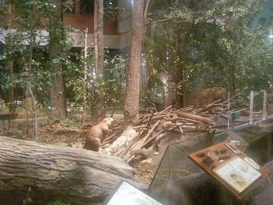 Raleigh Natural Science Museum Cost