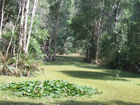 The Byron at Byron Resort & Spa: Beautiful acres of gardens to walk through