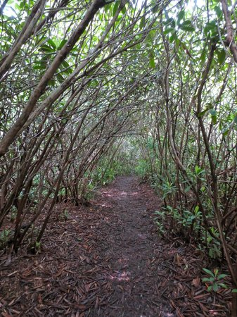 Rhododendron State Park - One of the shorter trails