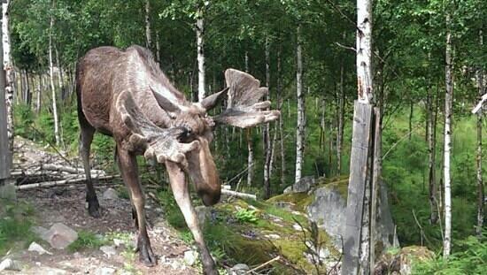 Nybro, Sverige: ....