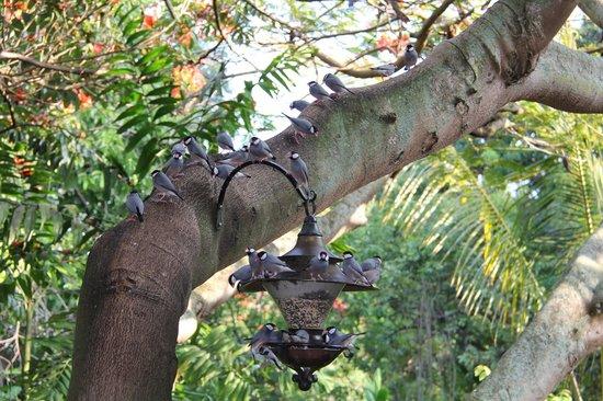 Honu Kai B&B: Watching the birds in the morning was entertaining