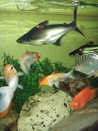 Sultanahmet Park Hotel: bahçede akvarium.