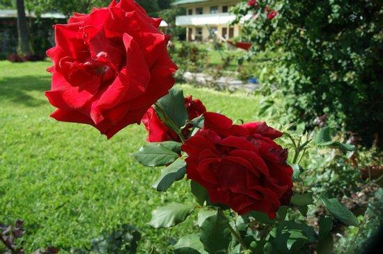 Jardines del Lago: flores