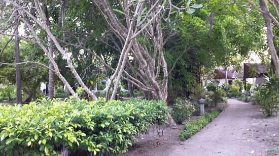 Bandos Maldives: Vegetation