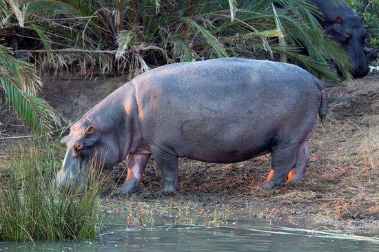 Shoreline Hippo and Croc Cruises: Hippo's and Croc Boat Safari St Lucia South Africa