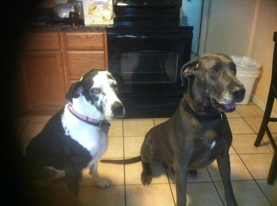 La Dolce Vita Villas: Zowie and our foster Duke on the right