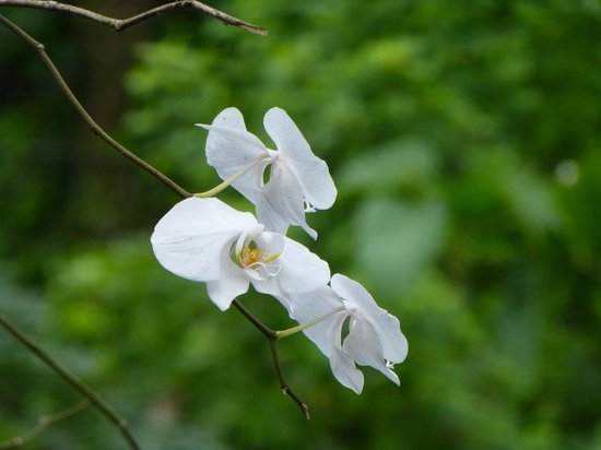 Bilit Adventure Lodge: Beautiful orchid outside the restaurant