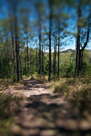 Living Valley Springs Health Retreat: Stretch your legs on one of our many walking trails