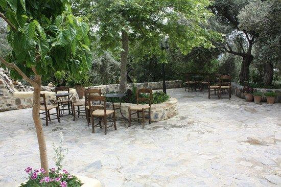 Eleonas : Une terrasse invitant à la détente à l'ombre des oliviers...
