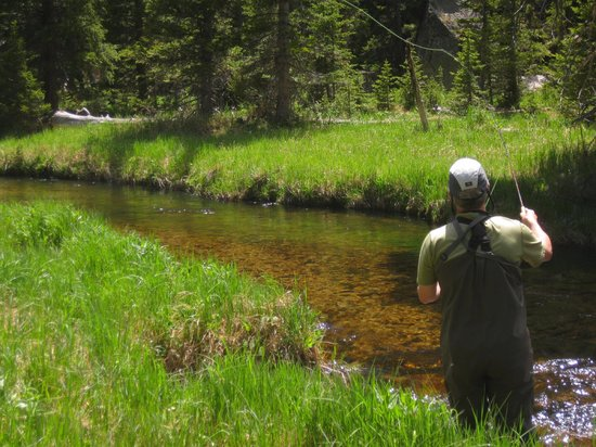 fly fishing in rocky mountain national park picture of