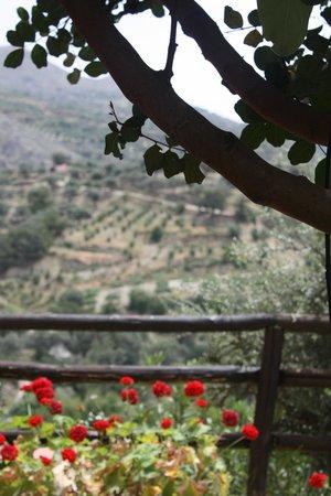Eleonas : vue depuis la terrasse