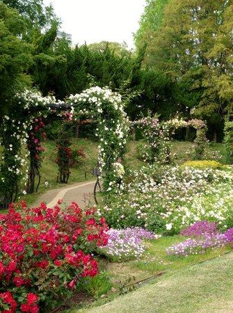 Utsubo Park: バラのアーチ