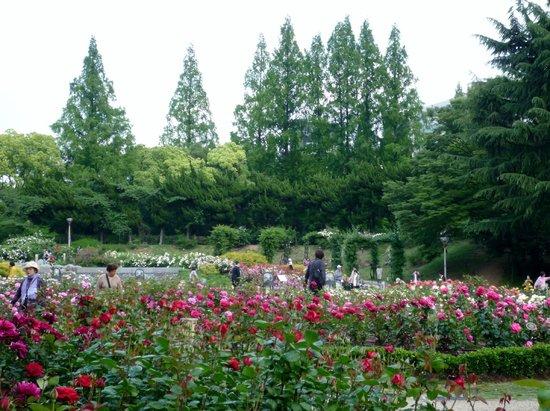 Utsubo Park: 遠目からも美しい