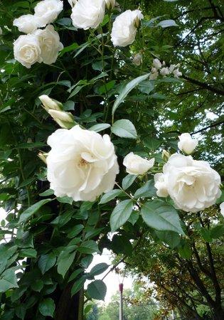Utsubo Park: バラが美しく咲いていました