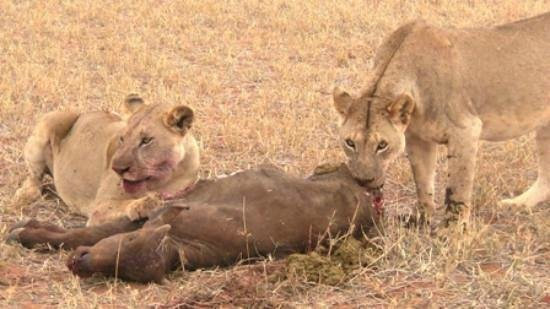 African Memorable Safaris: Safari beginning from Mombasa