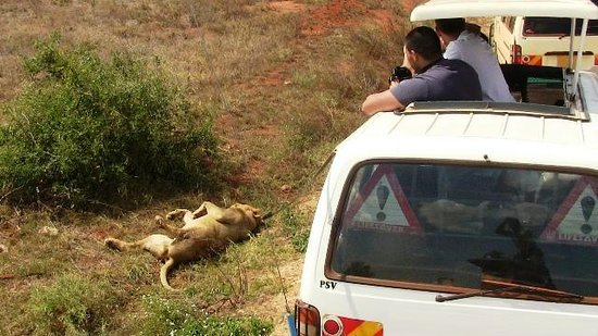African Memorable Safaris: group-safari-from-mombasa