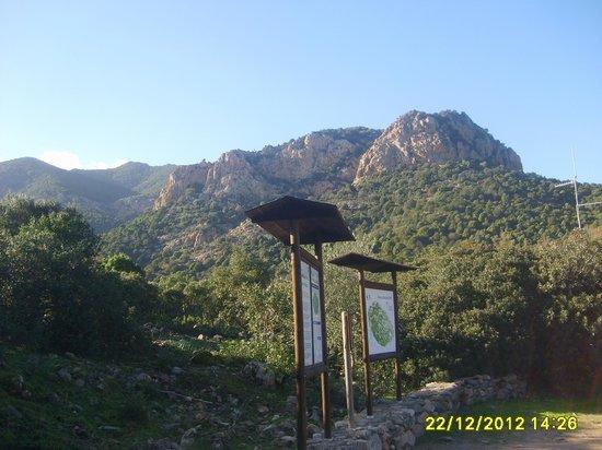 Monte Arcosu: W.W.F.
