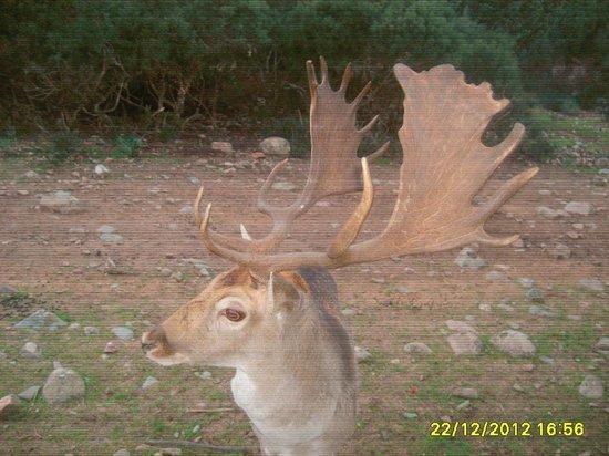 Monte Arcosu: Fauna