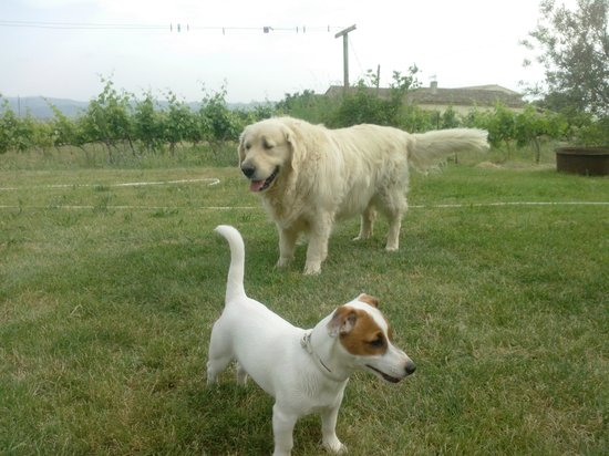 La Bastide st Victor : 2 of the cutes dogs - Kiara and Dolphy