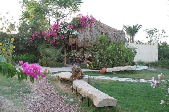 Sobek Lodge: The Garden