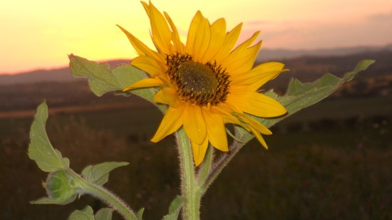 Villa Rosa dei Venti: Sunsets and sunflowers
