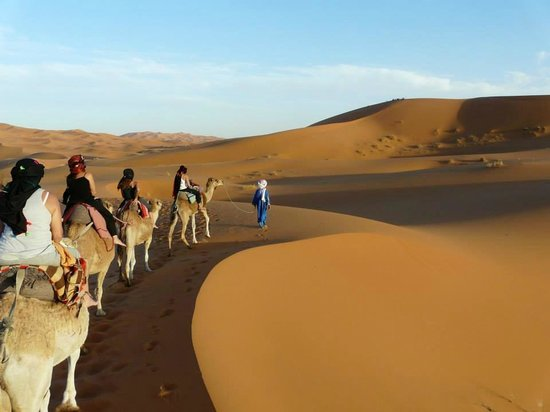 MyTrip4all : Camel tour in the desert