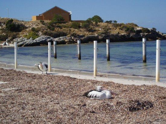 Rottnest Island Visitor Centre: Rotto