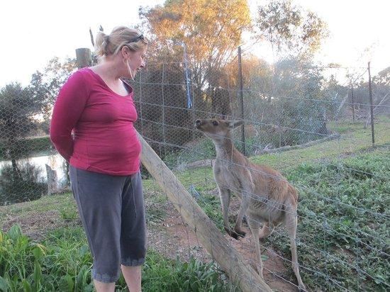Northam, Austrália: Park roo