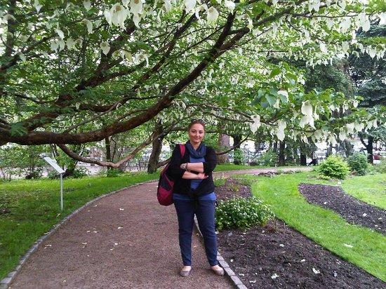 Botanical Gardens (Botanisk Hage og Museum) : meri
