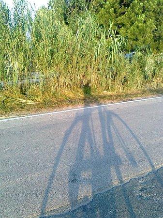 L'ombra lunga all'alba ...
