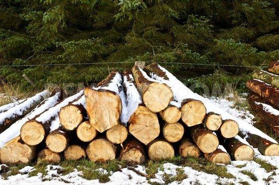 Carfraemill : Stockpiled wood