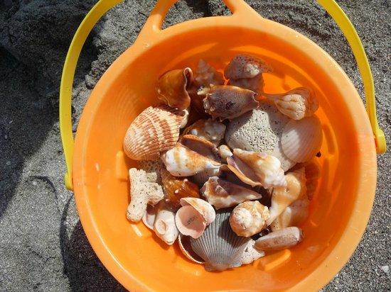 Shells at Turtle Beach