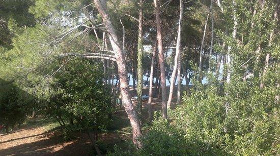 Dependance Villa Lovorka: vista dalla camera: pineta e mare