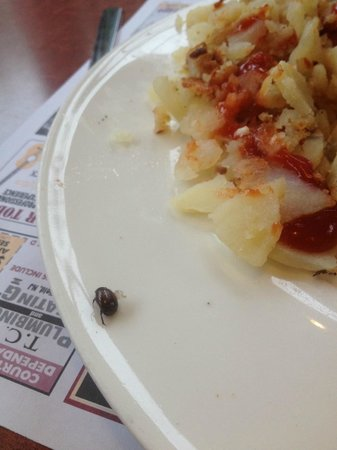 Mark TWAIN Diner Restaurant: Bug in food