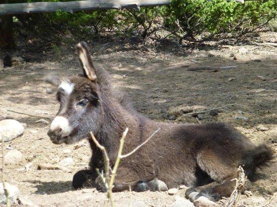 Rawah Ranch: Baby donkey