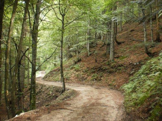 Monte Grappa: et tout en haut.....balade en forêt