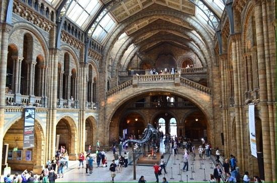 how to become a museum tour guide
