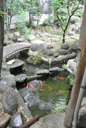 toco.-Tokyo Heritage Hostel: Koi pond in the garden