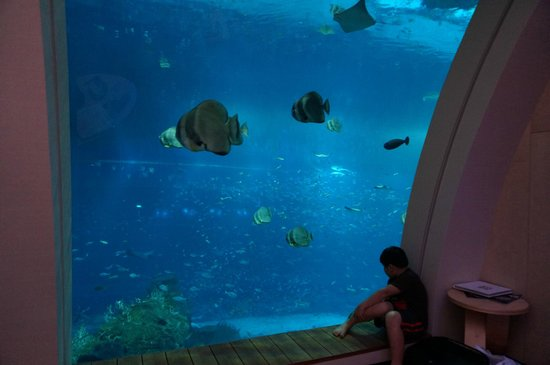 Resort World Sentosa - Beach Villas™: Kid looking at fishes all day